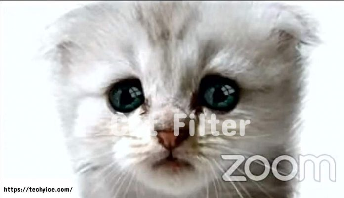 How to Use the Viral Zoom cat Filter in Your Video Calls